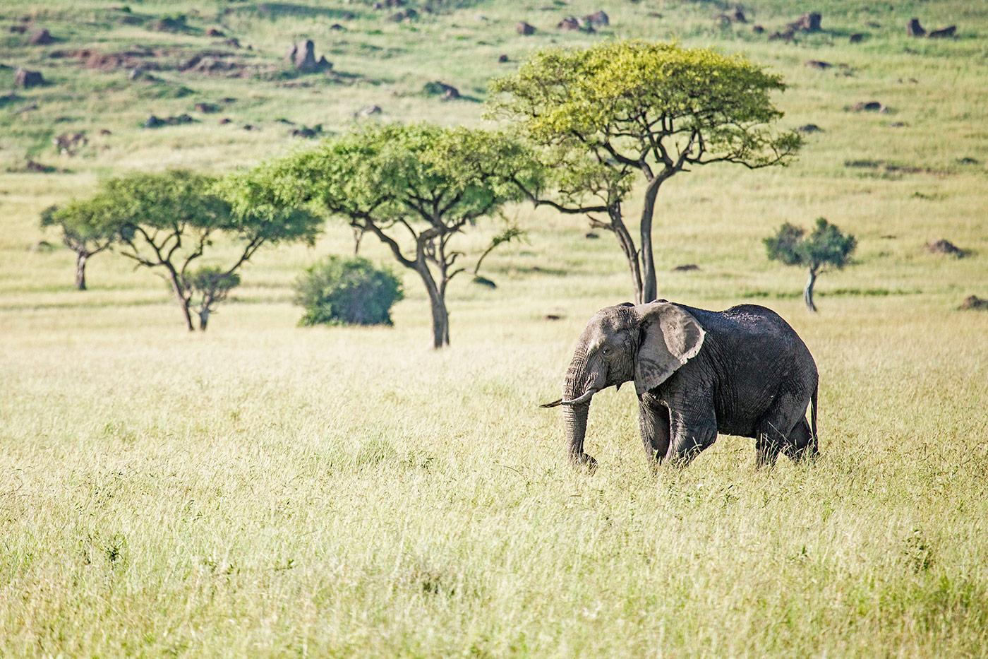 In der Masai Mara