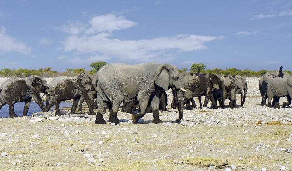 Elefanten um das Wasserloch in Etosha Nationalpark