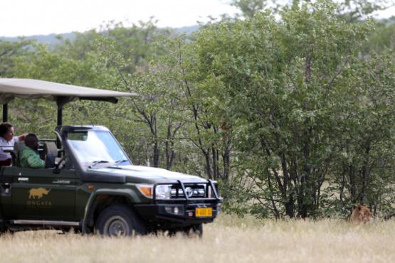 Suchbild. Löwe gefunden. Erlebnisreiche Pirschfahrten sind garantiert. (Ongava Lodge)