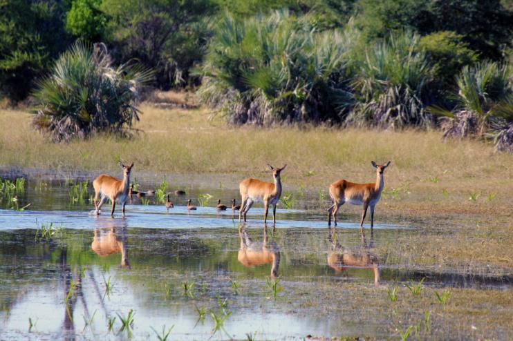Sambesi-Region