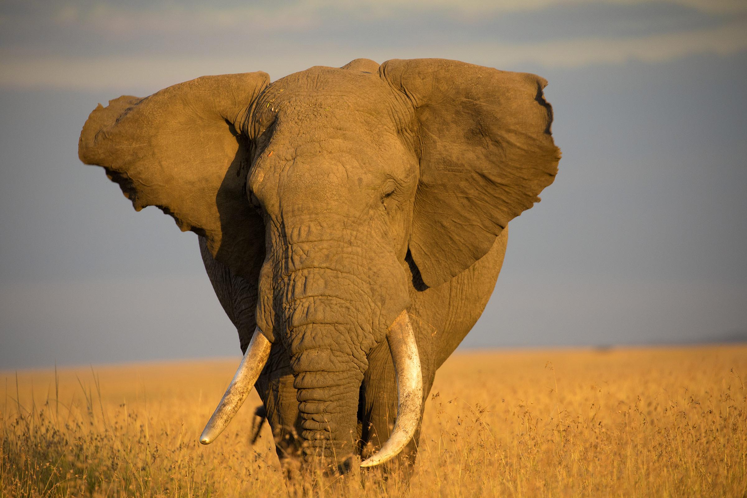 Afrika-Reisen vom Experten