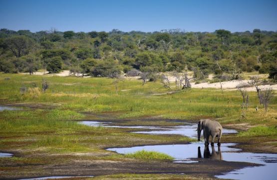 Elefant in der Wildnis in der Nähe des Meno a Kwena Camps