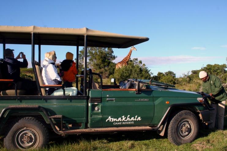 Giraffe auf einer Safari