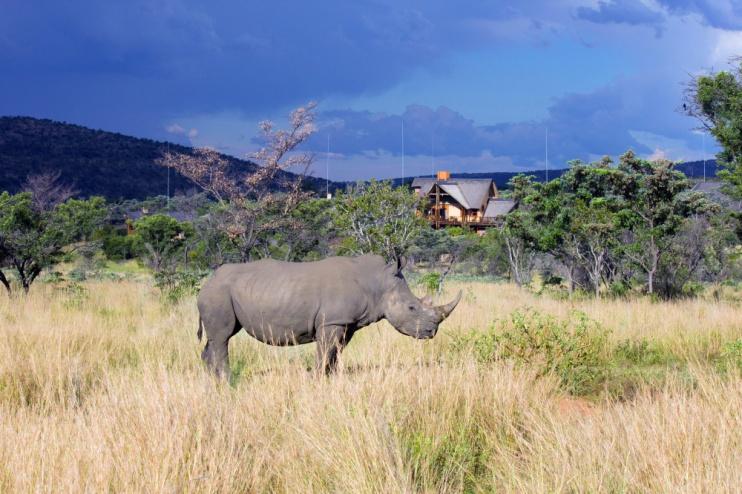 Kololo Game Reserve Nashorn
