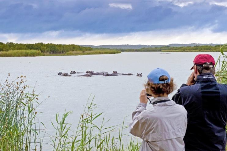 Flusspferd-Beobachtung