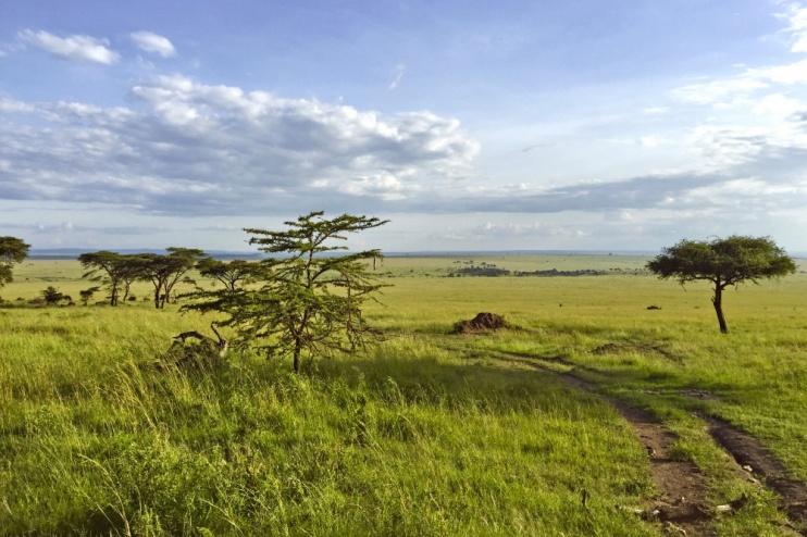 Savanne in der Masai Mara