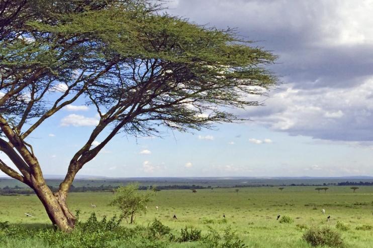 Weite in der Masai Mara