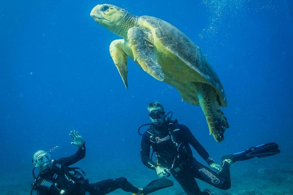 Tauchen mit Meeresschildkröte