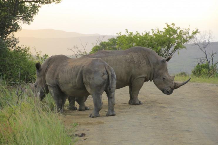 Nashörner im Hluhluwe Game Reserve