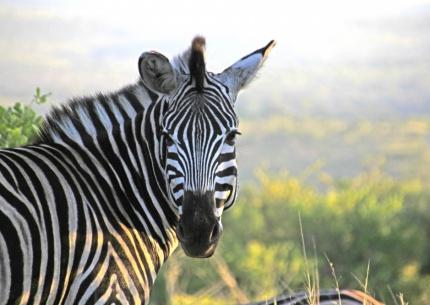 Für alle was dabei - Familienreise in Südafrika