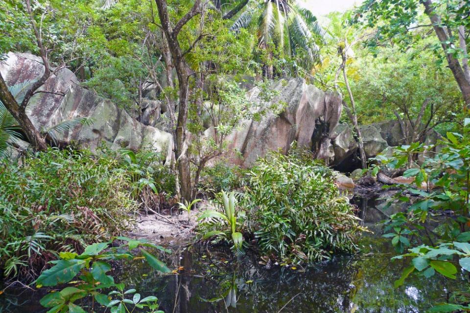 Unterwegs im Wald auf der Insel La Digue