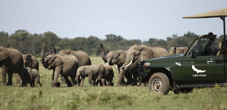 Elefanten bei einer Safari durch die Masai Mara