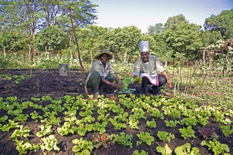 Frische Zutaten aus dem Garten des Olonana Camps