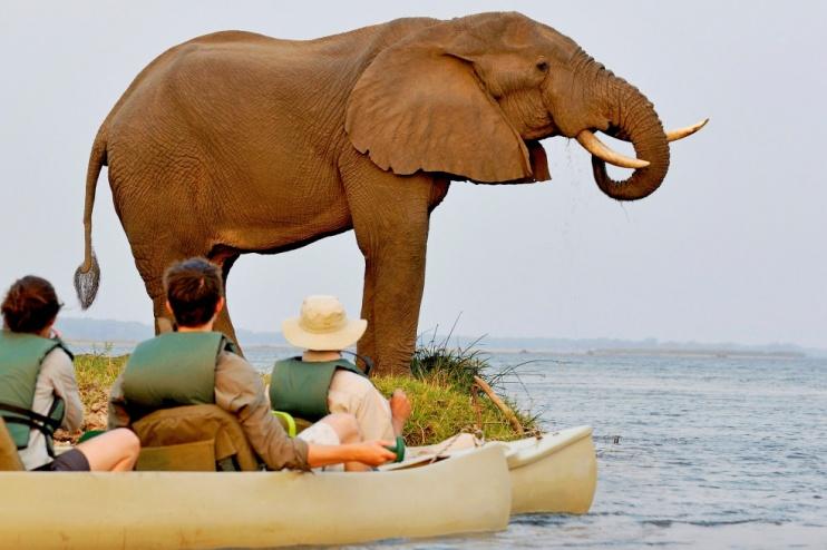 Begegnung mit Elefant bei einer Kanufsafari