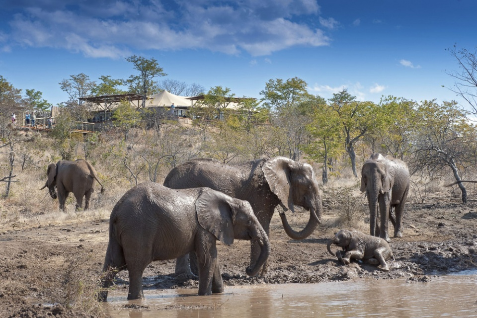The Elephant Camp, Elefanten, Wasserloch