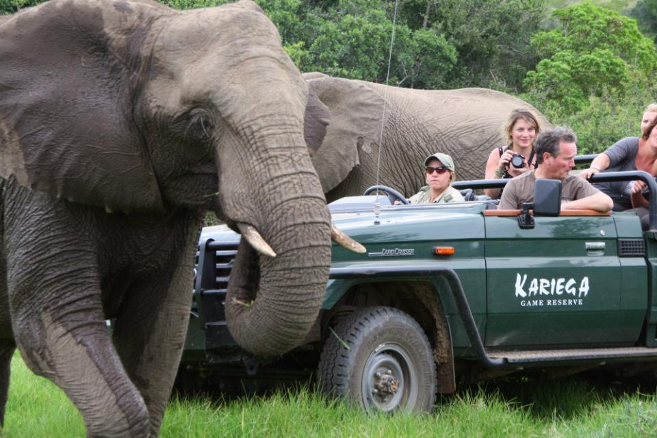 Game Drive im Kariega Game Reserve
