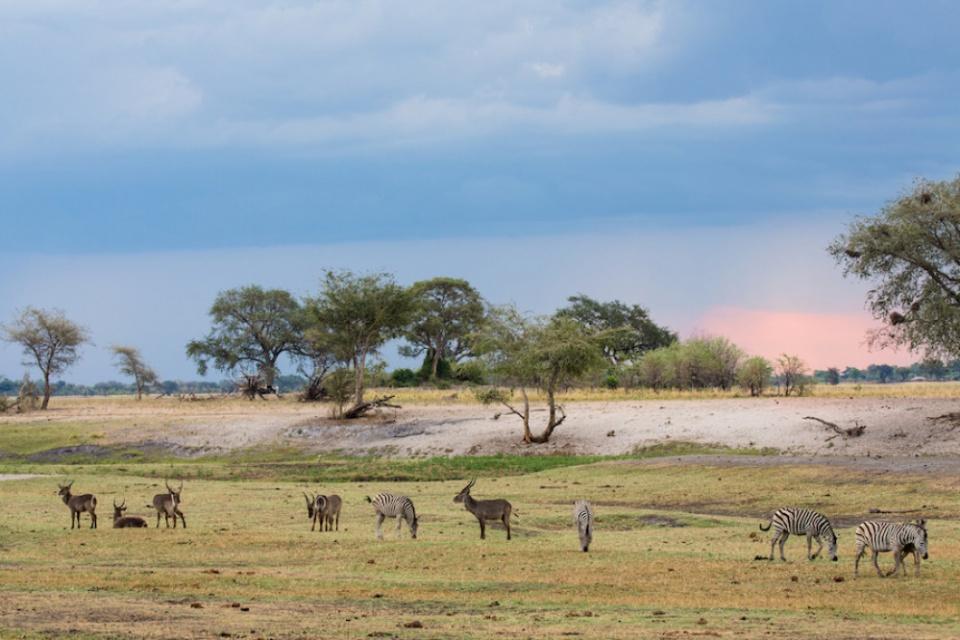 Bushways Safaris, Safari