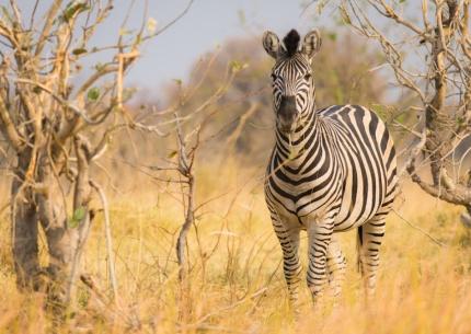 Camping Safari: Botswana hautnah