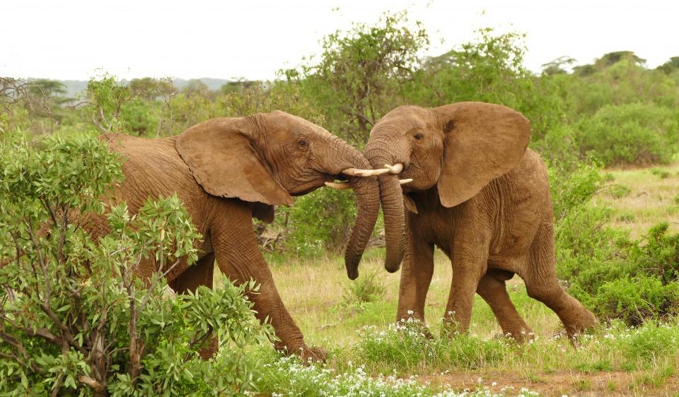 Die einmaligen Seen im Great Rift Valley und die Masai Mara