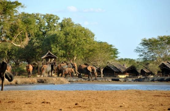 Elefantenbesuch im Satao Camp
