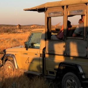 Tierbeobachtung während einer Pirschfahrt