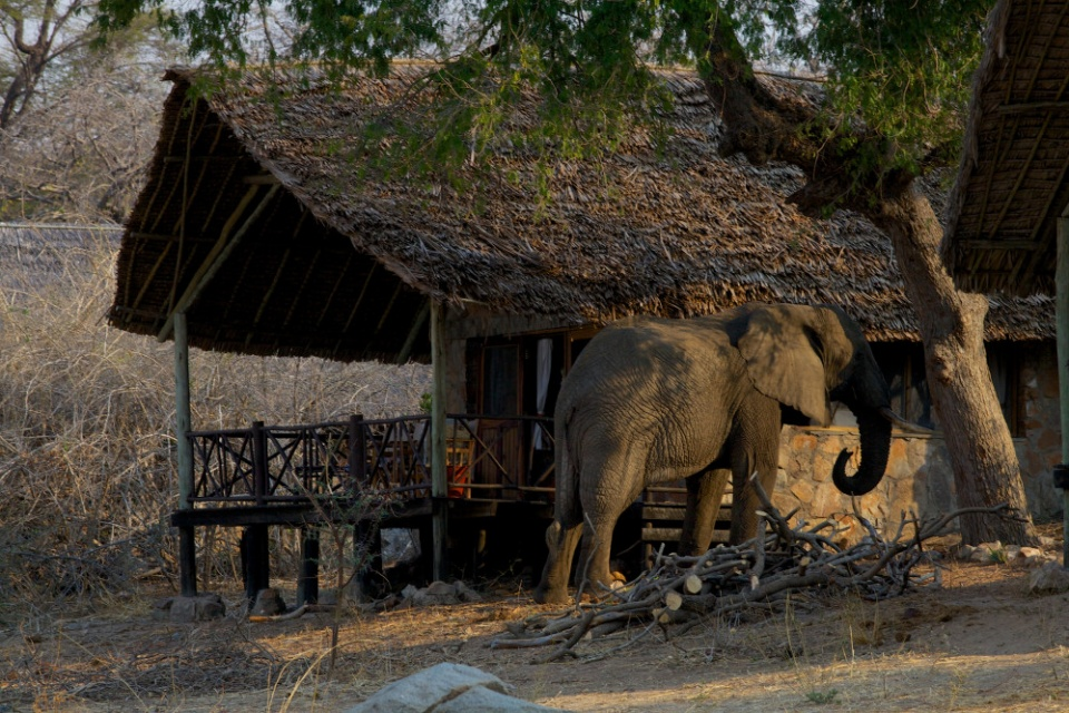 Ruaha River Lodge, Elefant vor Zelt