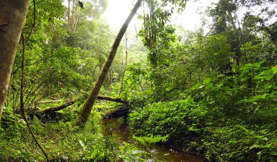 Urwald im Norden von Madagaskar