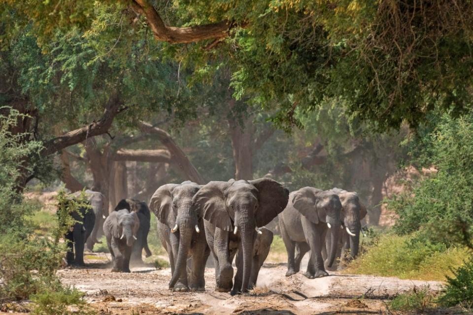 Elefanten beim Damaraland Camp
