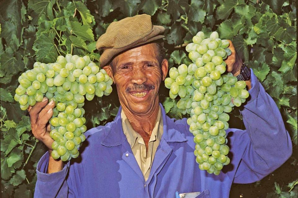 Wein aus Südafrika ist mittlerweile weltbekannt