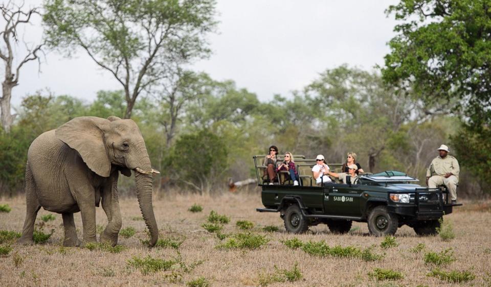Pirschfahrt im Sabi Sands Game Reserve