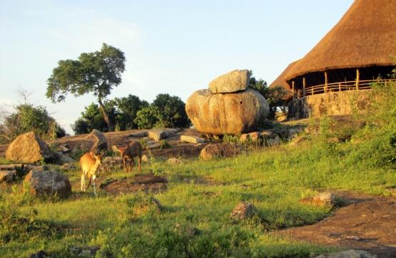Wasserböcke vor der Rwakobo Rock Lodge