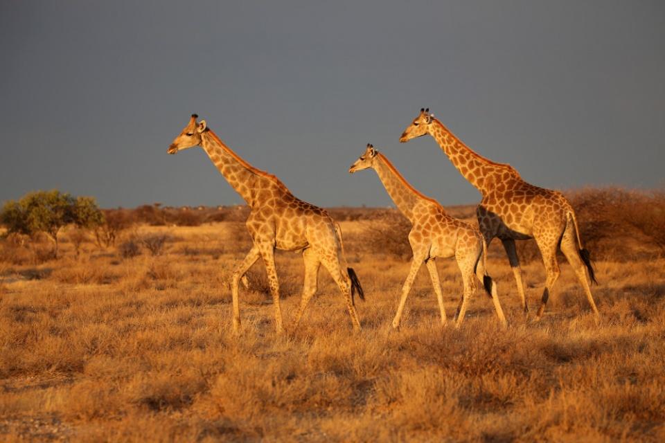 Reisetraum Botswana – statt träumen selbst erleben …