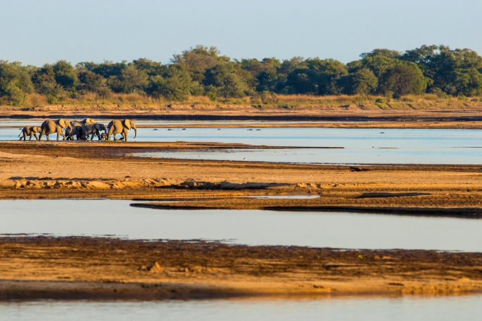 Elefantenherde am Luambe