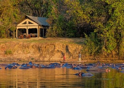 Unglaubliche Flusspferdepopulation im Luambe Fluss, direkt vor dem Campim Luambe National