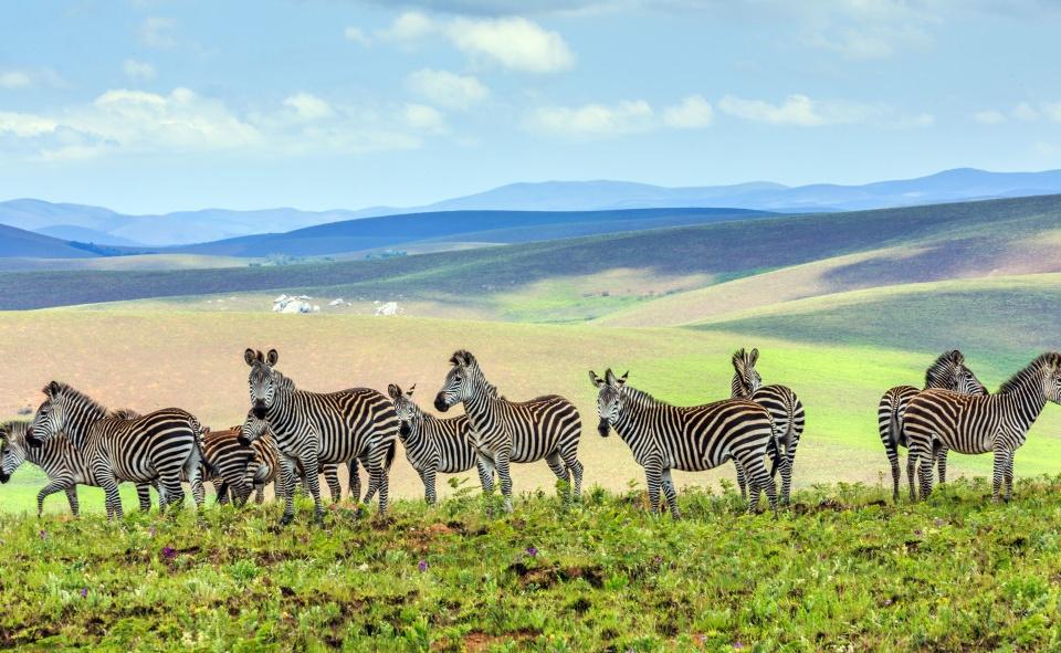 Tiere, Natur und Strand im Norden Malawis