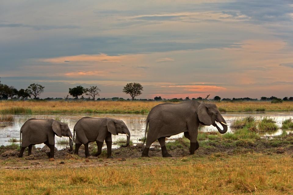 Botswana-Linyanti-Elefanten-am-Wasserloch-Kwando Lagoon elephants