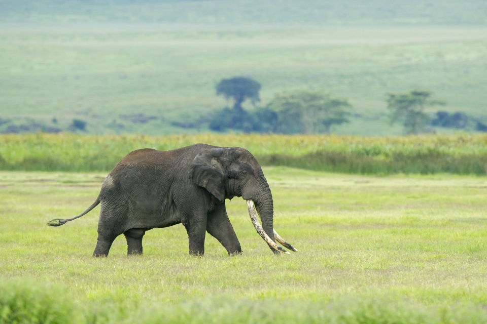 Tansania-Serengeti-Nationalpark-Elefant-EAT_2019_6NTZ_Nomad_Tanzania_Serengeti_Nationalpark_Elefant_39619657240_80284c104b_o