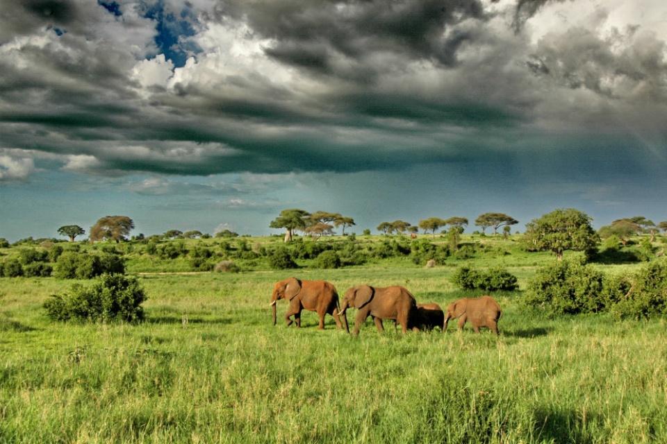 Elefantenherde im Tarangire Nationalpark