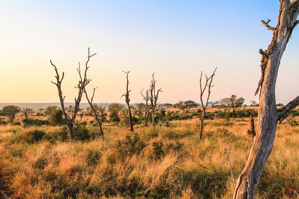 Landschaft im Mkhaya Game Reserve