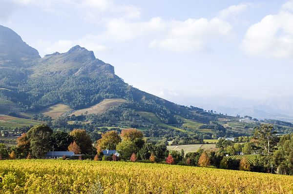 Weinberge in der Region Stellenbosch
