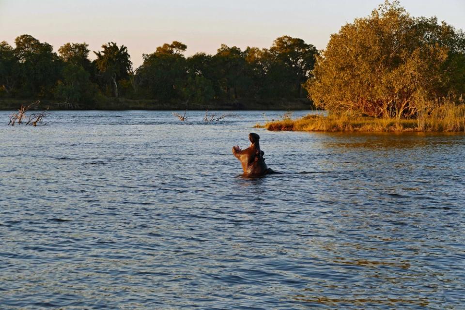 Nilpferd Sambesi River